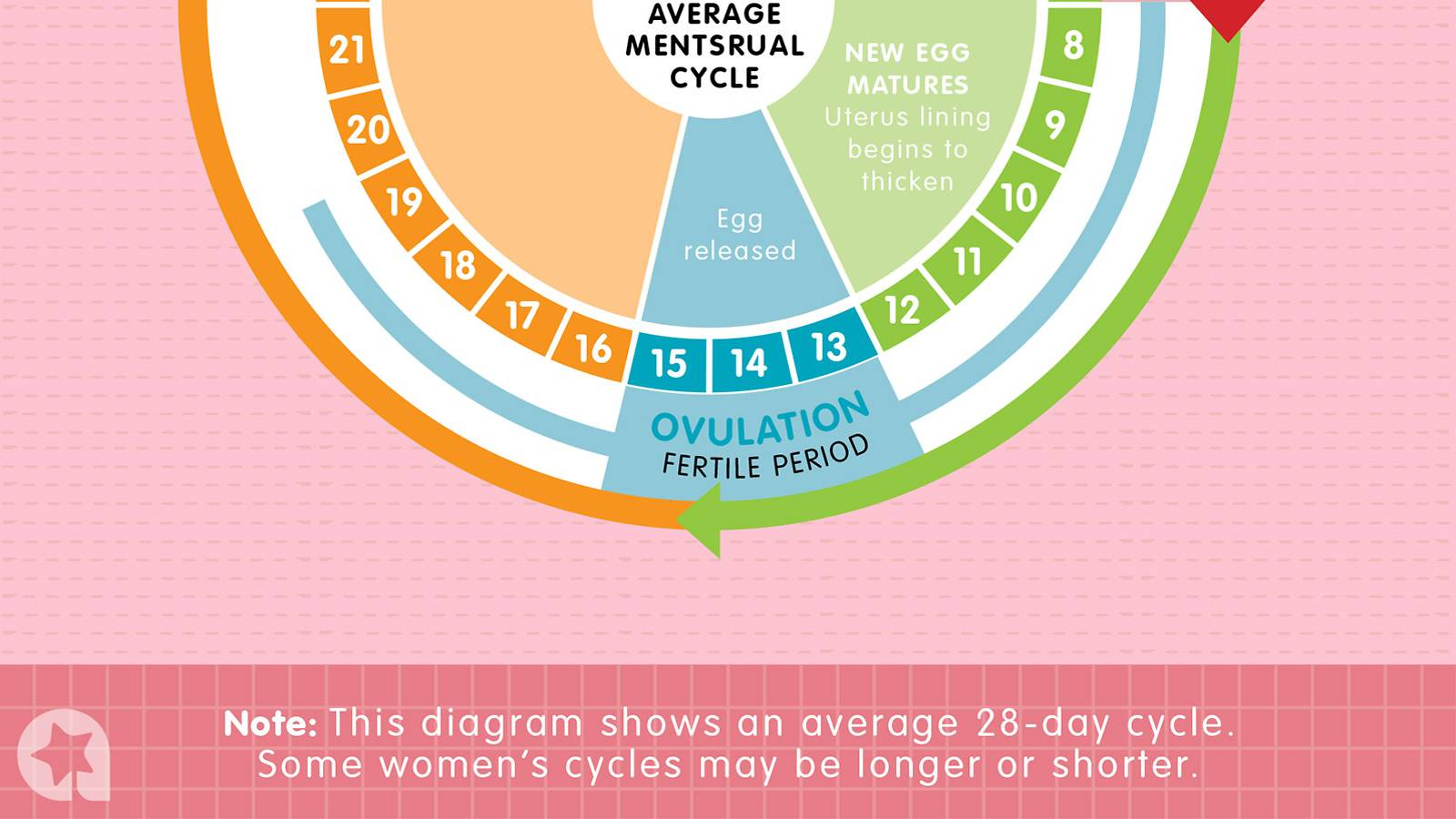 Conceiving-–-Know-when-you're-fertile-with-this-easy-chart2b