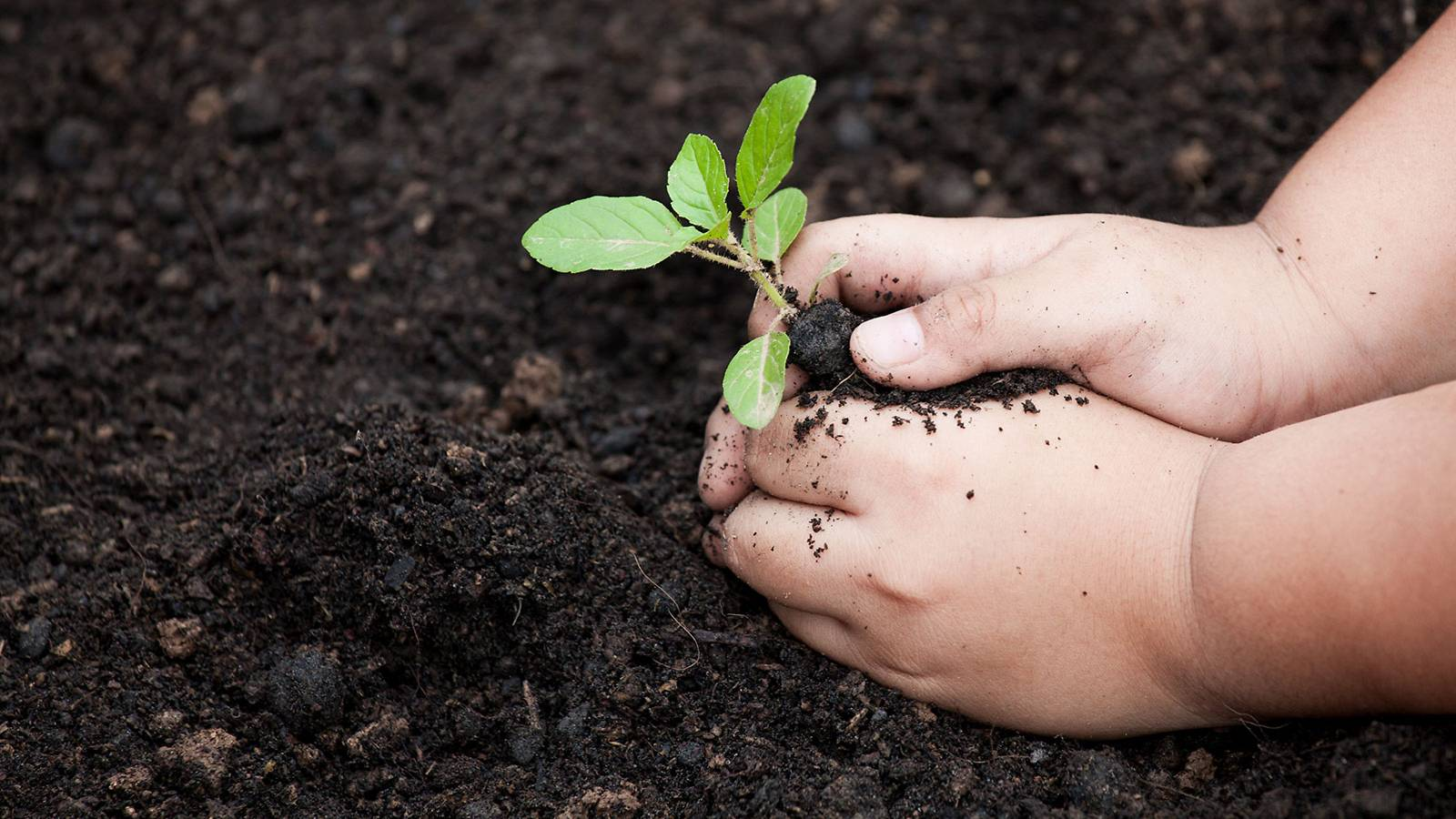Tots-6-easy-tips-to-start-a-home-garden-with-junior-2
