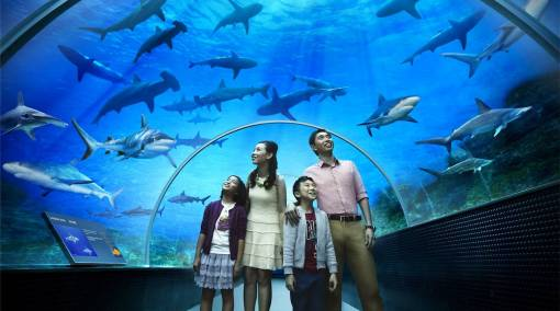 PARENTS-13-Must-book-activities-for-September-hols-seaaquarium